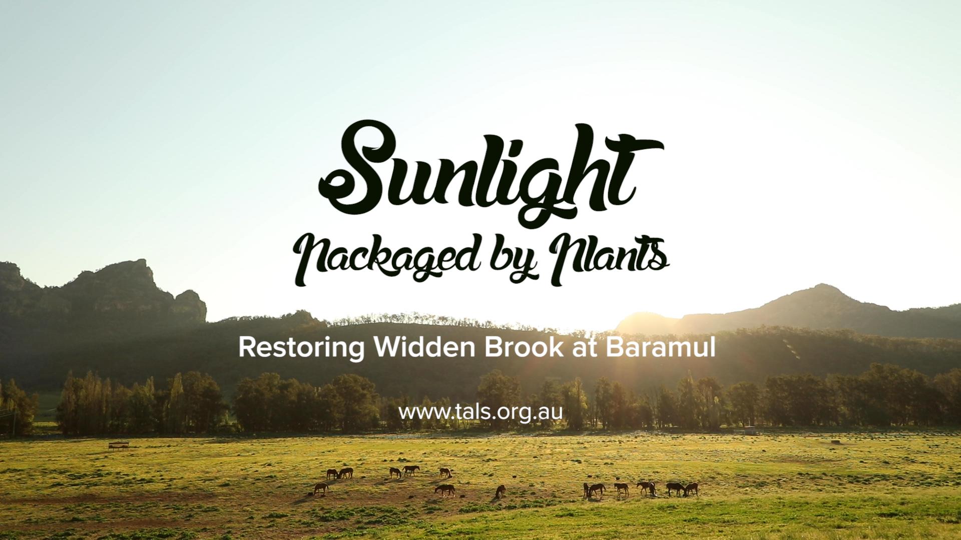 Sunlight Packaged by Plants - Peter Andrews restoring Widden Brook at Baramul